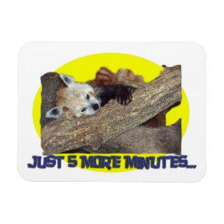 Just 5 More Minutes...Sleeping Red Panda Rectangular Photo Magnet