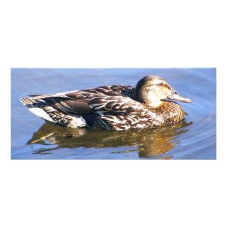 Just a Duck Rack Card