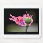 Just a flower – Pink poppy flower 015 Mouse Pads