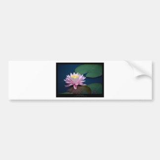 Just a flower – Pink waterlily flower 008 Bumper Sticker