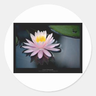 Just a flower – Pink waterlily flower 037 Classic Round Sticker