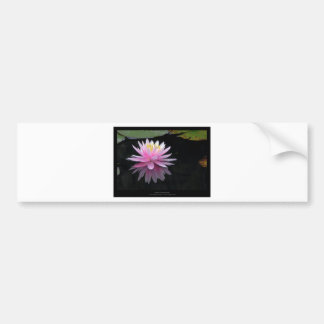 Just a flower – Waterlily flower 017 Bumper Sticker