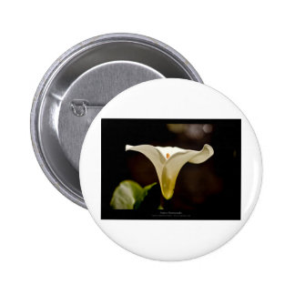 Just a flower – White lily flower 018 Button