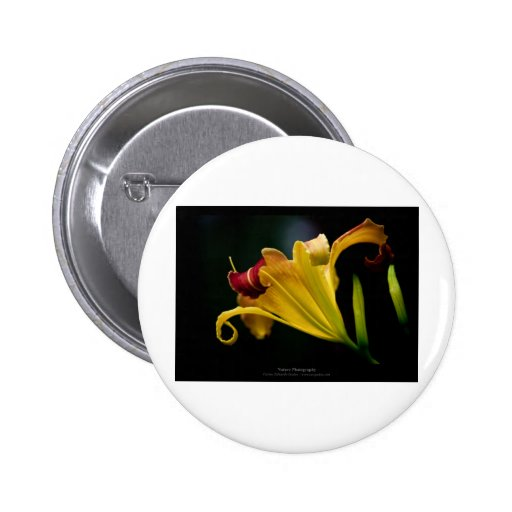 Just a flower – Yellow lily flower 016 2 Inch Round Button