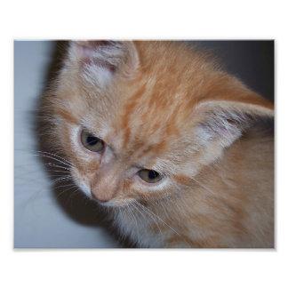 Just a Kitten Art Photo