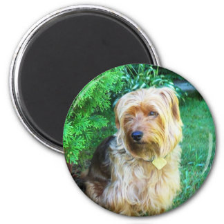 Just another day for a Silky Yorkie Terrier 2 Inch Round Magnet