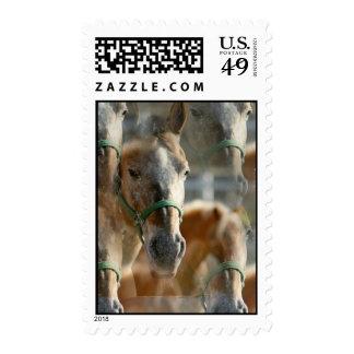 Just Appaloosa Postage Stamp