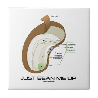 Just Bean Me Up (Bean Diagram) Ceramic Tile