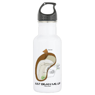 Just Bean Me Up (Bean Diagram) Stainless Steel Water Bottle
