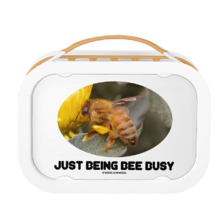 Just Being Bee Busy (Bee On Yellow Flower) Lunch Box