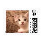Just Being Cute Postage Stamp