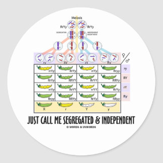 Just Call Me Segregated and Independent (Dihybrid) Classic Round Sticker
