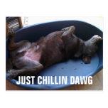 Just chillin dawg postcard
