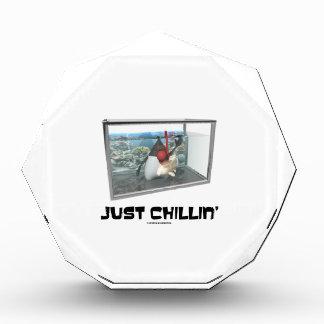 Just Chillin' (Java Duke Snorkeling Fish Tank) Awards