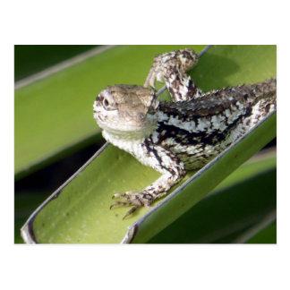 Just Chillin Lizard Postcard