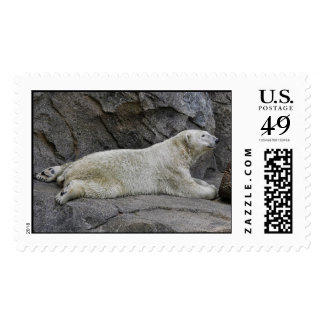 Just Chilling After Cool Dip Polar Bear Postage Stamp