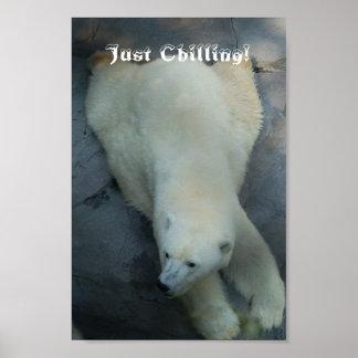 Just Chilling - Polar Bear Poster