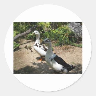 Just Ducky! Classic Round Sticker