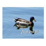 Just Ducky! Post Cards