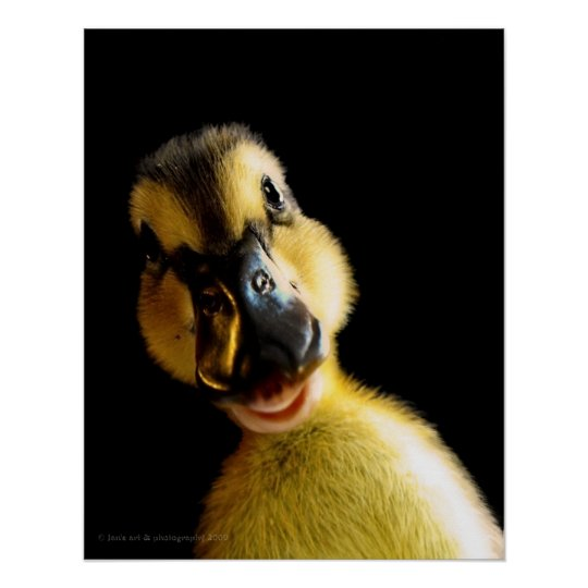 Just Ducky Poster