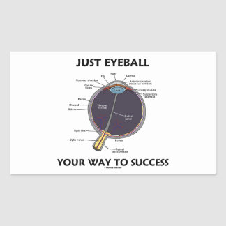 Just Eyeball Your Way To Success (Eye Anatomy) Stickers