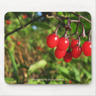 Just Hanging Around Mouse Pad