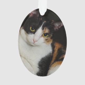 Just Hanging Around Ornament