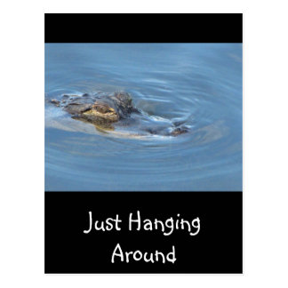 Just Hanging Around Postcard