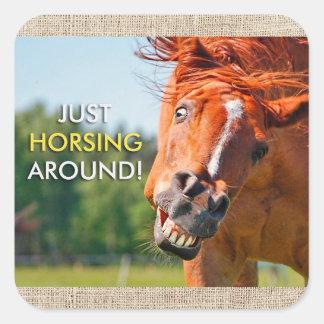 Just Horsing Around Horse Photograph Square Sticker