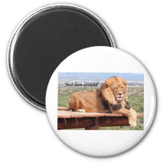 Just lion around magnet
