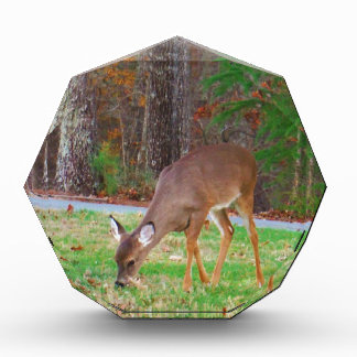 Just  Lost Spots, Baby Deer Award