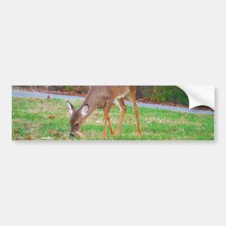 Just  Lost Spots, Baby Deer Bumper Sticker