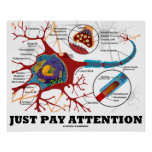 Just Pay Attention (Neuron / Synapse Anatomical) Print