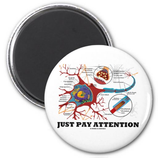 Just Pay Attention (Neuron / Synapse) Refrigerator Magnets