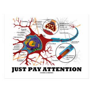 Just Pay Attention (Neuron / Synapse) Postcard
