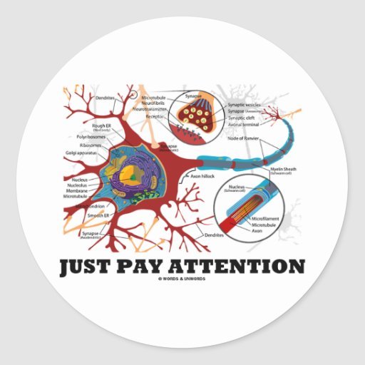 Just Pay Attention (Neuron / Synapse) Stickers