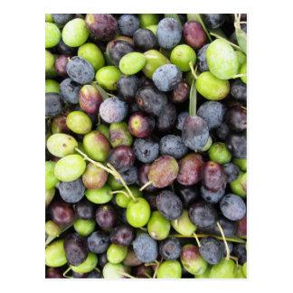 Just picked olives background during harvest time postcard