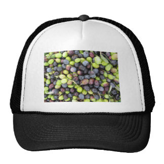 Just picked olives background during harvest time trucker hat