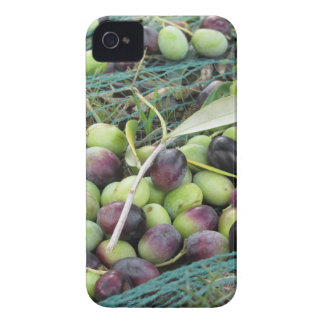 Just picked olives on the net during harvest time Case-Mate iPhone 4 case