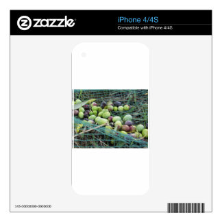 Just picked olives on the net during harvest time decal for the iPhone 4S