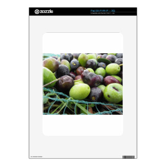Just picked olives on the net during harvest time iPad skin