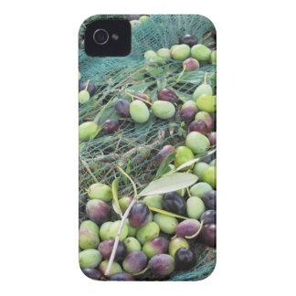 Just picked olives on the net during harvest time iPhone 4 Case-Mate case