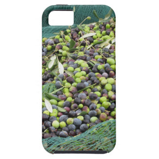Just picked olives on the net during harvest time iPhone SE/5/5s case