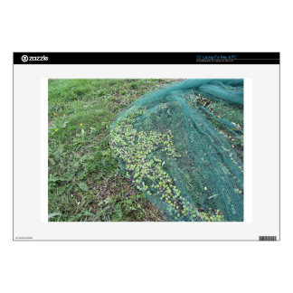 Just picked olives on the net during harvest time laptop skin