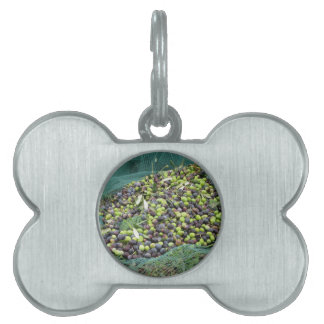 Just picked olives on the net during harvest time pet tag