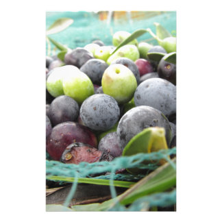 Just picked olives on the net during harvest time stationery