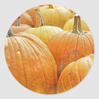 Just Pumpkins in the Patch Classic Round Sticker