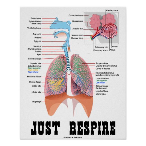 Just Respire (Respiratory System) Poster