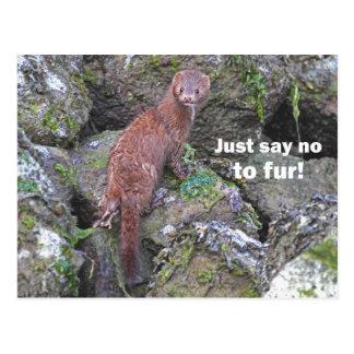 """Just Say No to Fur"" Mink Postcard"