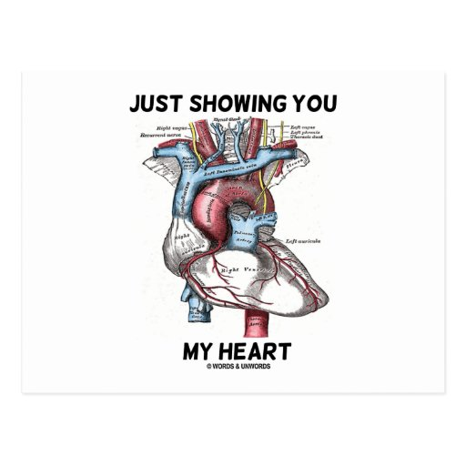 Just Showing You My Heart (Anatomical Heart) Postcard